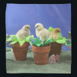 """Silkie Chicks in Bloom Bandana<br><div class=""""desc"""">Photograph of adorable baby silkie chickens sitting in flower pots.</div>"""