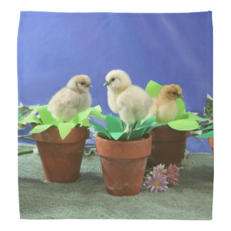 Silkie Chicks in Bloom Bandana