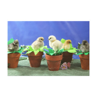 Silkie Chicks in Bloom Canvas Prints