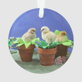 Silkie Chicks in Bloom Ornament