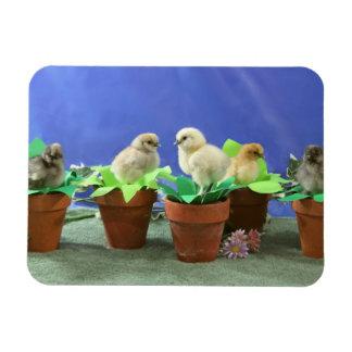 Silkie Chicks in Bloom Vinyl Magnet