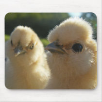 Silkie chicks mouse pad