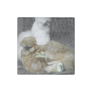Silkie Hens with Chicks Peeking out of Feathers Stone Magnet