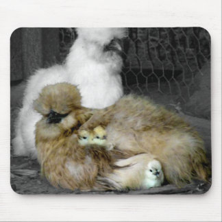 Silkie Hens with Chicks Peeking out of Feathers Mouse Pad