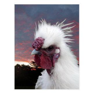 Silkie Rooster Postcard