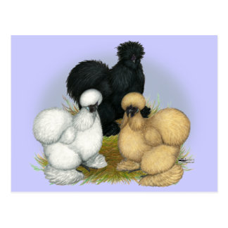 Silkie Trio Post Cards