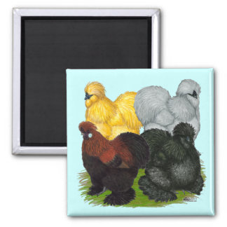 Silkies:  Assorted Roosters 2 Inch Square Magnet