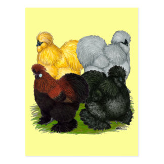 Silkies:  Assorted Roosters Postcard