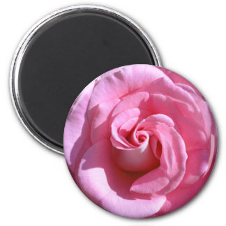 Silky Pink Rose Magnet