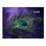 Silky Purple Peacock Feather Postcard