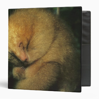 Silky Pygmy) Anteater, Cyclopes didactylus), 3 Ring Binder