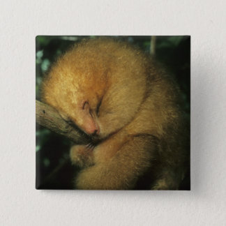 Silky Pygmy) Anteater, Cyclopes didactylus), Button