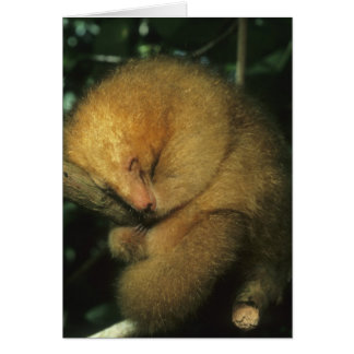 Silky Pygmy) Anteater, Cyclopes didactylus), Card