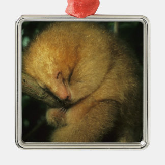 Silky Pygmy) Anteater, Cyclopes didactylus), Metal Ornament