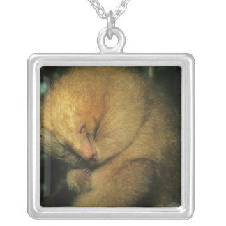Silky Pygmy) Anteater, Cyclopes didactylus), Silver Plated Necklace