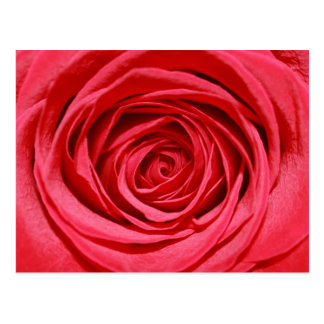 Silky Red Roses Petals Romantic Flowers Postcard