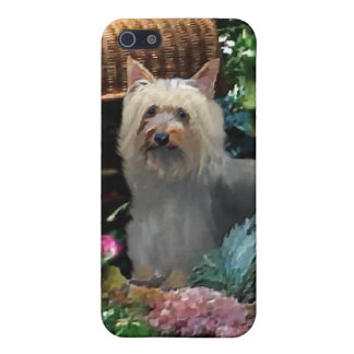 Silky Terrier Art iPhone SE/5/5s Cover