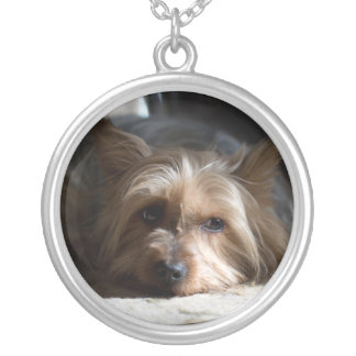 silky / yorkshire terrier pendant necklace