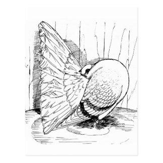 Silla de montar de la cola de milano 1978 postal