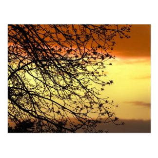 Sillouette Postcard