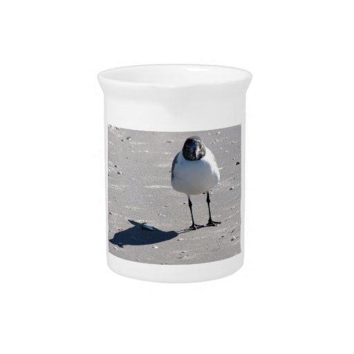 Silly Beach Bird Beverage Pitcher