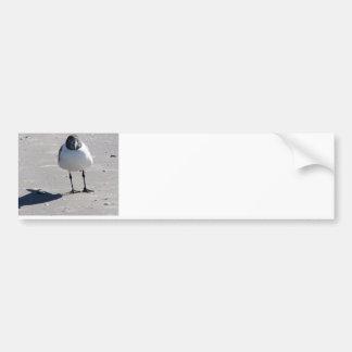 Silly Beach Bird Car Bumper Sticker