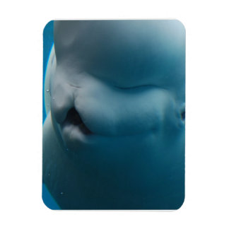 Silly Beluga Whale Flexible Magnets