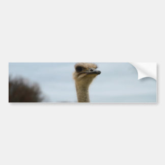 Silly Bird Photo Ostrich Face Head Closeup Bumper Sticker