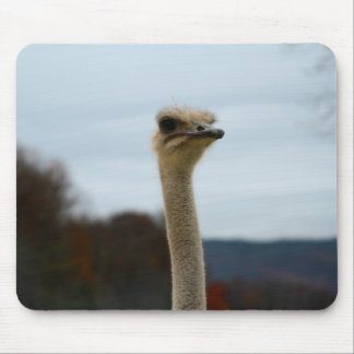 Silly Bird Photo Ostrich Face Head Closeup Mouse Pad