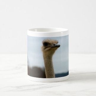 Silly Bird Photo Ostrich Face Head Closeup Classic White Coffee Mug