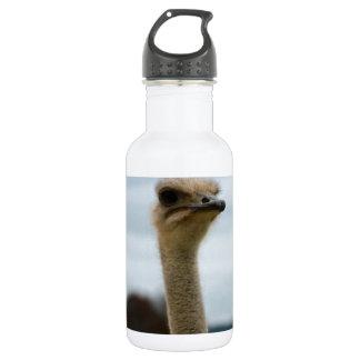 Silly Bird Photo Ostrich Face Head Closeup Stainless Steel Water Bottle