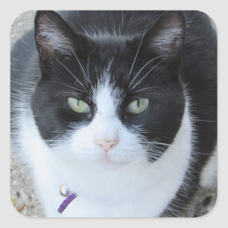 Silly Black and White Kitty Photo Sticker