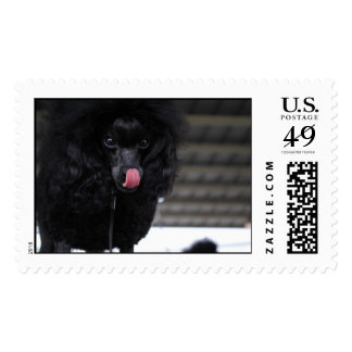 Silly Black Poodle Stamps