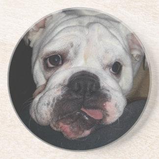 Silly Bulldog Puppy Face Coaster
