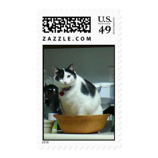 Silly Cat Postage Stamps