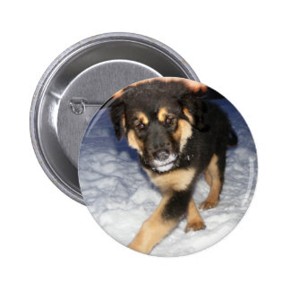Silly Dog photo Buttons