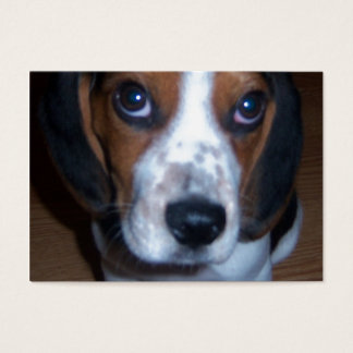Silly Dog Randy beagle puppy Business Card