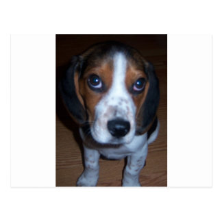 Silly Dog Randy beagle puppy Postcard