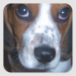 Silly Dog Randy beagle puppy Square Stickers