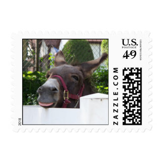 Silly Donkey Postage Stamps (SMALL)
