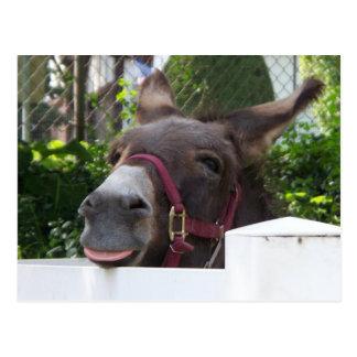 Silly Donkey Postcard