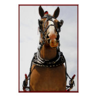 Silly Face Horse Poster