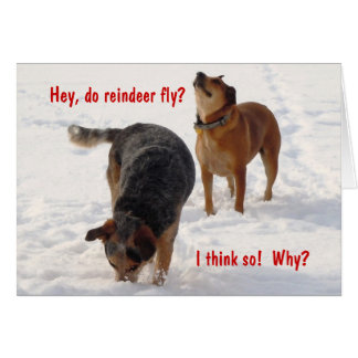 Silly Funny Cattle Dogs Christmas Snow Greeting Card