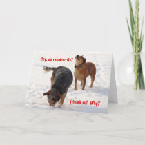 Silly Funny Cattle Dogs Christmas Snow Holiday Card