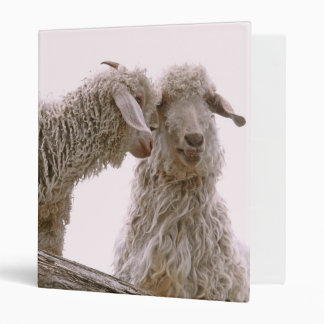 Silly Goats Photo Vinyl Binders