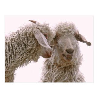 Silly Goats Photo Postcard