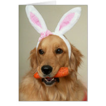 SIlly Golden Retriever dog with Easter Bunny ears Card