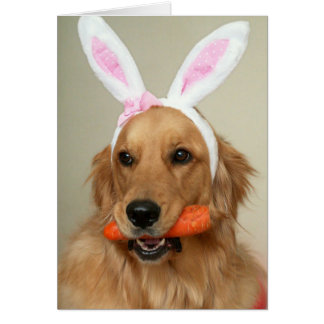 SIlly Golden Retriever dog with Easter Bunny ears Card