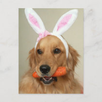 SIlly Golden Retriever dog with Easter Bunny ears Holiday Postcard
