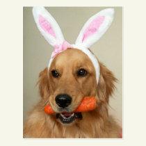SIlly Golden Retriever dog with Easter Bunny ears Postcard